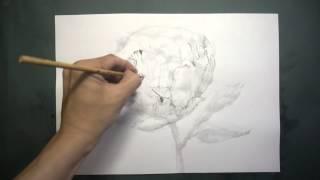 【HOW TO DRAW-描き方】「 シャクヤク(chinese peony」を墨でデッサン。《8倍速》