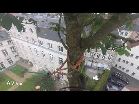 Abattage d'un Marronnier | Drt Zigzag Black Widow