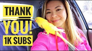 Thank you for 1K subscribers! Poppy the Indian Ringneck is wearing ...