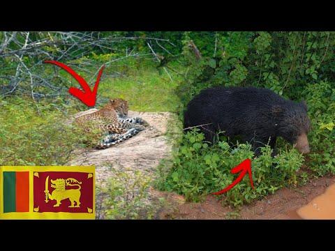 We Found the RAREST Animals in Sri Lanka (Travel Vlog Pre Covid)