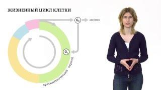 Жизненный цикл клетки. Решение генетических задач-4