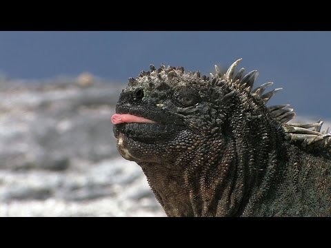 The Galapagos Islands HD
