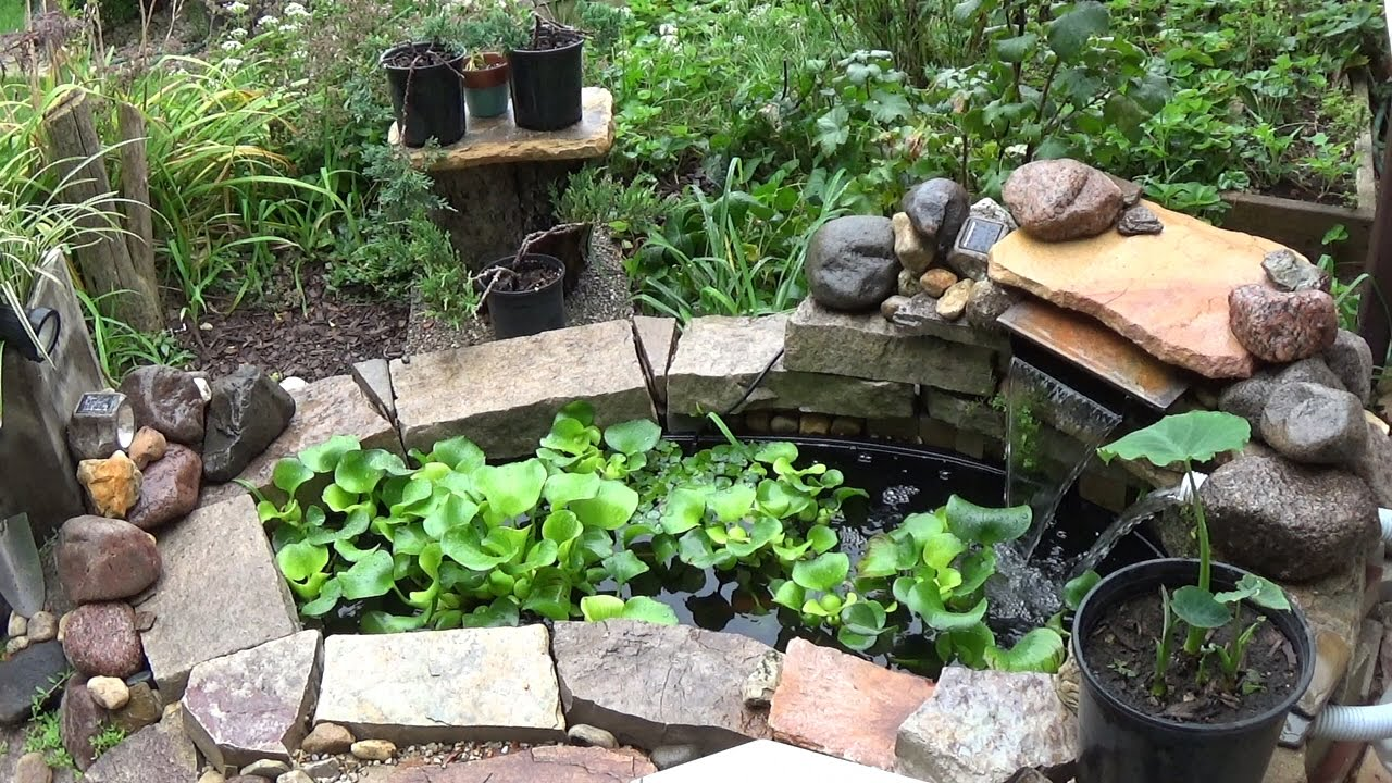 Small Backyard Garden Koi & Goldfish Pond - Update (Part 2 ...