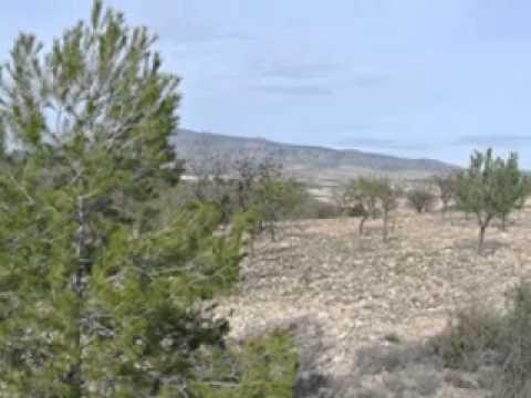 Land for sale La Zarza in Murcia in Spain