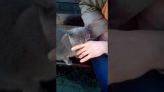 Кошка странно себя ведет!!!