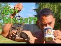 How To Trap A Mole - GUARANTEED To Work!!!