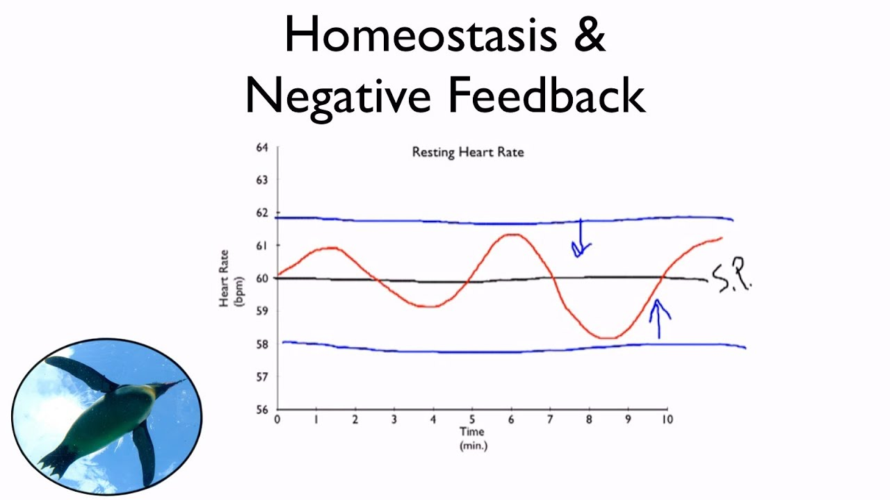 the positive and negative feedback in biological systems Last 5 pages viewed: negative feedback  there are several negative feedback  in biological system to  compare: positive feedback.
