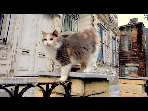 Turkey's Cat Island