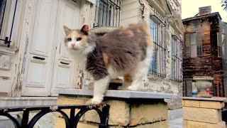 Острів Туреччини кіт