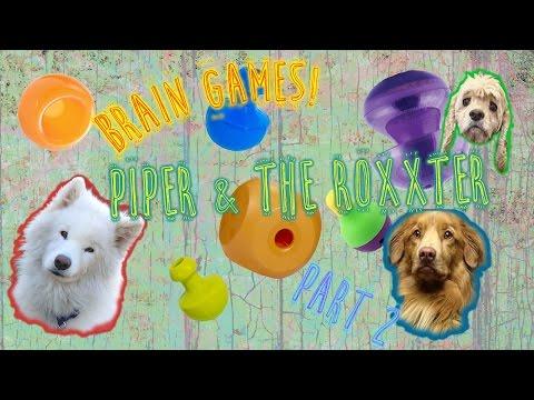 dogs-love-brain-toys!-[pt.-2-piper-&-the-roxxter]