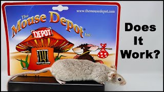 Does The Mouse Depot Mouse Trap Catch Mice? Some Work and Some Don't. Mousetrap Monday