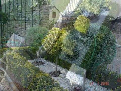 Arbusti ornamentali youtube for Arbusti ornamentali