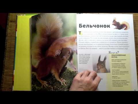 Книга: Энциклопедия животных для детей. Знакомые малыши