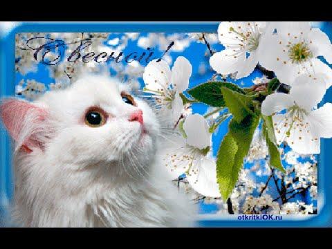 первым марта днем картинки с весны