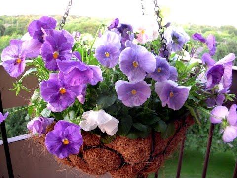 цветов оазис фото