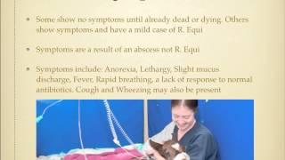 Rhodococcus Equi Pneumonia in Foals