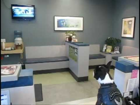 Image of: Lacey Animal Chopper The Biker Dog Stops By The Vca Animal Clinic To Watch Some Dog Tv Changeorg Chopper The Biker Dog Stops By The Vca Animal Clinic To Watch Some