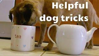 Helpful Dog Tricks!