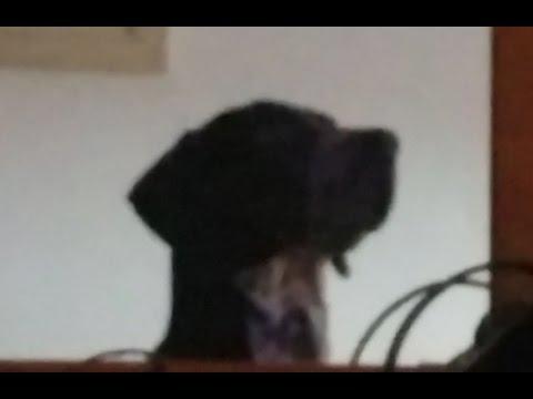 Jack.DogTV