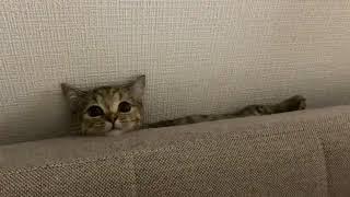 帰宅したらソファーの間で発見した