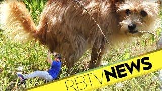 Hunde die dein Essen klauen, Spiele mit Schmerz, Game-Two-Sommerpause | News aus dem Kliemannsland