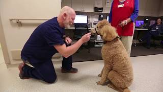 Hospital therapy dog is an Ace for patients