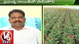 Sagubadi | Paddy Crop Farming Techniques | Agriculture News - V6 News