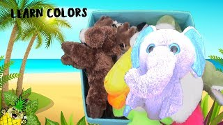 Learn Animals and Colors in Blue Box