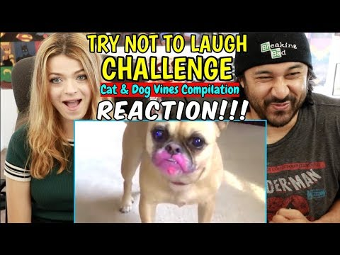 TRY NOT TO LAUGH CHALLENGE | Funny Cat & Dog Vines | REACTION!!!