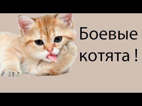 игра ударный отряд котов 3 с читами