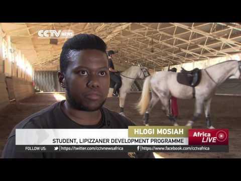 South Africa's Lipizzaner development program trains new generation of riders
