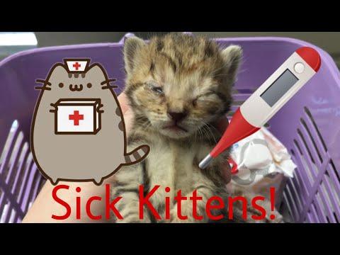 Newborn Kittens Go to the Vet! (New Years Kittens)