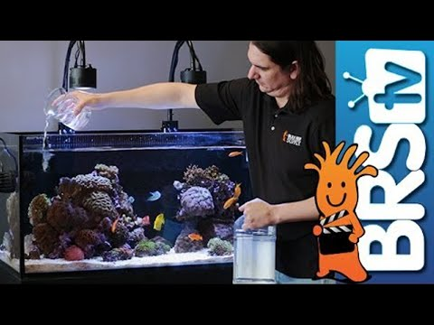 How To: Dosing 2 Part In Your Reef Tank