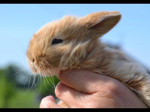 Hasenbabys Film Kaninchenbabys 1. Bis10 Tag - Entwicklung Von Hasen Babys - HD Video