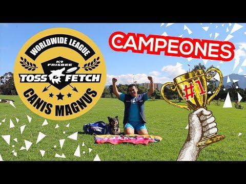 Somos CAMPEONES!!! K9 Toss & Fetch | SMARTDOGS