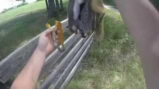 squirrel hunting with natural fork slingshot