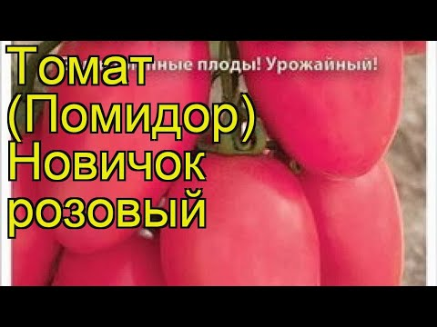 Томат Новичок розовый. Краткий обзор, описание характеристик, где купить семена solánum lycopérsicum