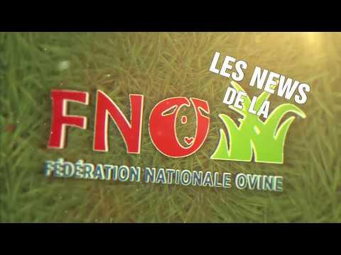 Rapport d'activité FNO 2017
