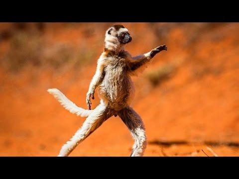 Самое смешное видео про животных (funny animals)