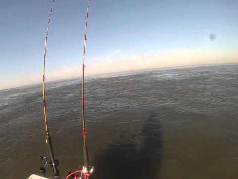 Menhaden Biomass - Mouth of Brazos River 10-06-2015