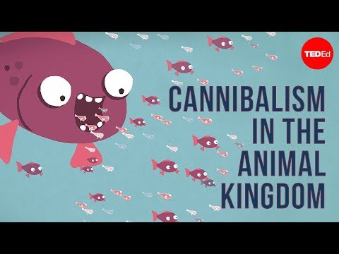 Cannibalism in the animal kingdom - Bill Schutt