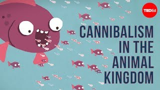 Download Cannibalism in the animal kingdom - Bill Schutt Mp3 and Videos