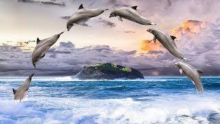Relaxing Music for Sleeping | THE ENCHANTED OCEAN | Sleep Meditation Music