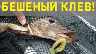 Рыбалка на спиннинг ловля окуня наловил мешок за 30 минут каждая поводка окунь Ультралайт рулит