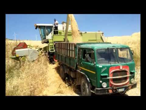 Campofelice di Fitalia: la coltivazione del grano oggi