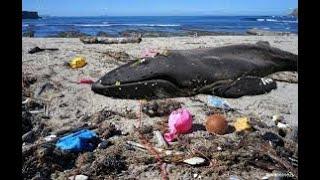 Куда улетают гелиевые шарики? Хватит убивать природу.