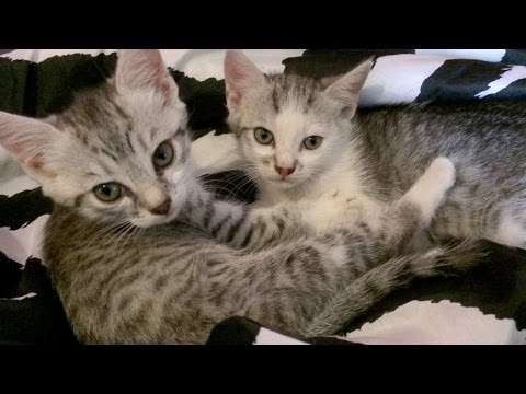 Cute Little Kittens - CUTENESS OVERLOAD