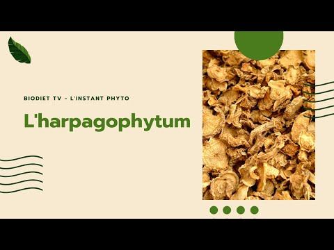 harpagophytum et arthrose