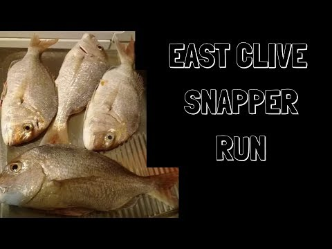 EAST CLIVE SNAPPER