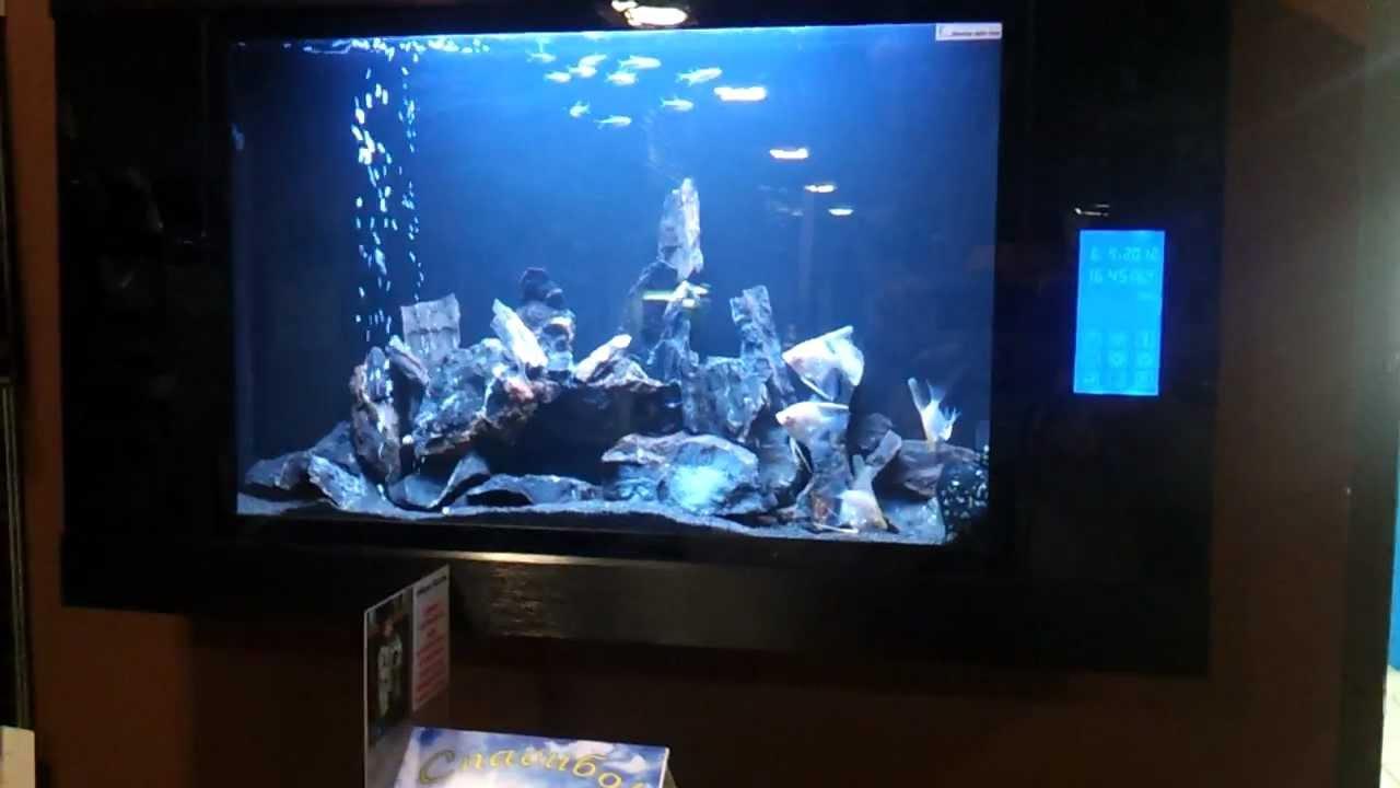Объявления о продаже рыбок, фильтров и насосов раздела аквариум в петрозаводске на avito.